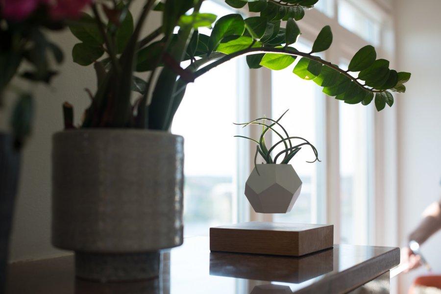 FLYTE LYFE. New Labels Only. Levitating Plants